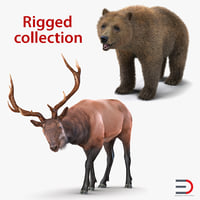 Bear and Elk Rigged 3D Models Collection