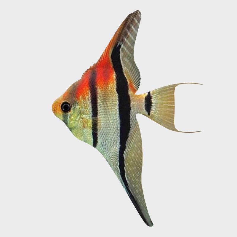 3D sunfish