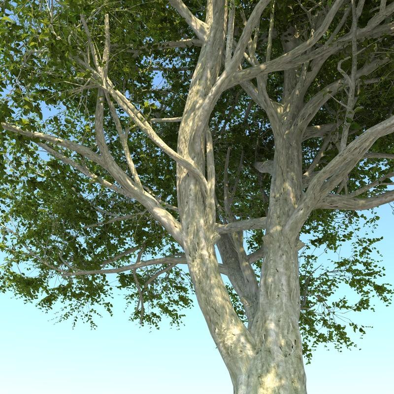 3D tree pack 2 model