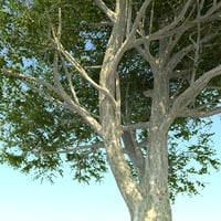 DGarch_Tree_Pack_2