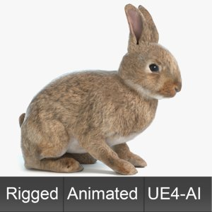 3D rabbit animations
