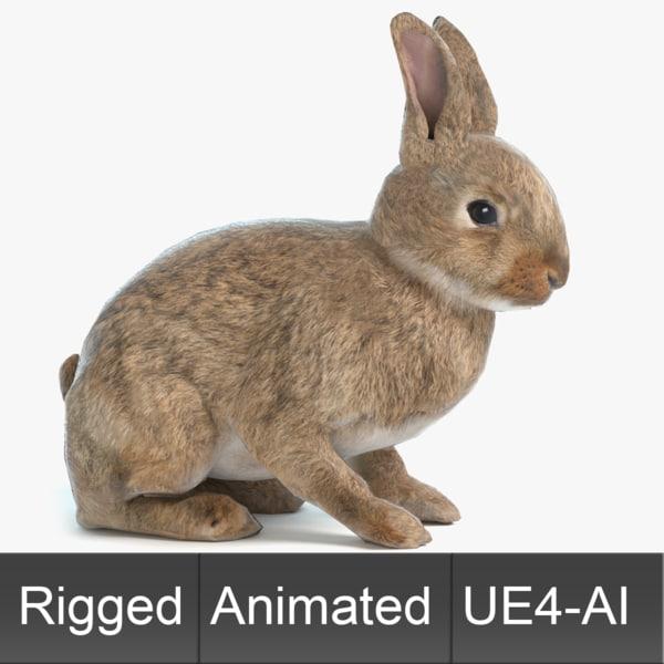 3D rabbit animations
