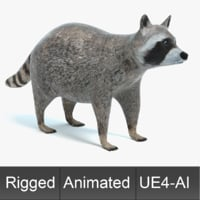 3D raccoon animations model
