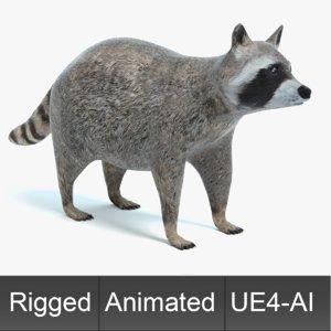 3D raccoon animations model