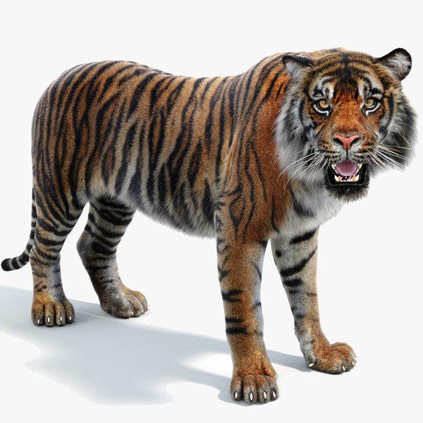 3D sumatran tiger fur rigged