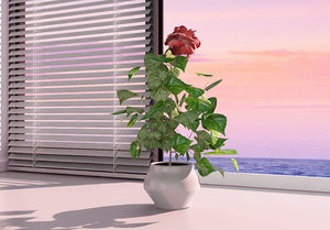 hibiscus small tree 3D model
