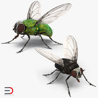 3D rigged flies