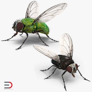 3D rigged flies