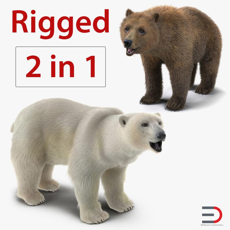 brown polar bears rigged 3D