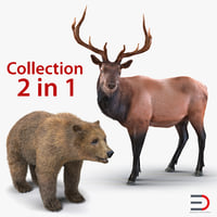 Bear and Elk 3D Models Collection