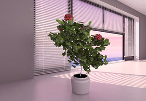 3D hibiscus medium tree model