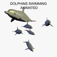 3D group dolphins swimming animation model