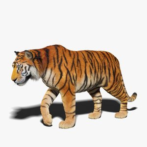 tiger fur rigged 3D model