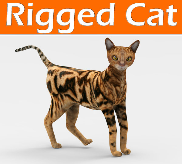 3D cat rigged model