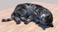 3D cats feline model