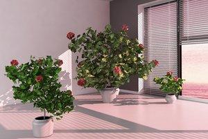 hibiscus tree 3D