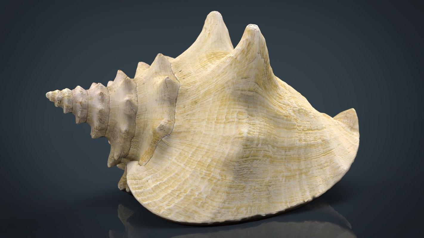 realistic sea shell 3D model