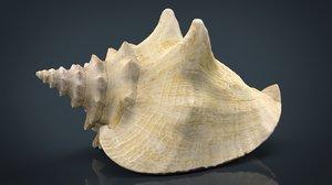 realistic sea shell 3D model