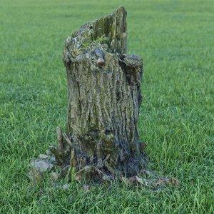 photorealistic tree stump model
