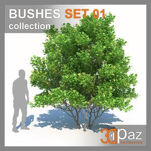 bush 3D