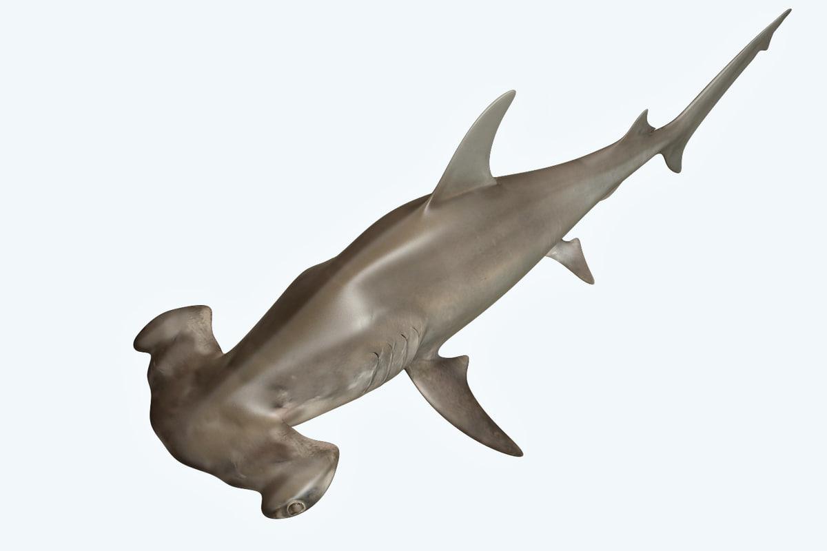 3D hammerhead shark model