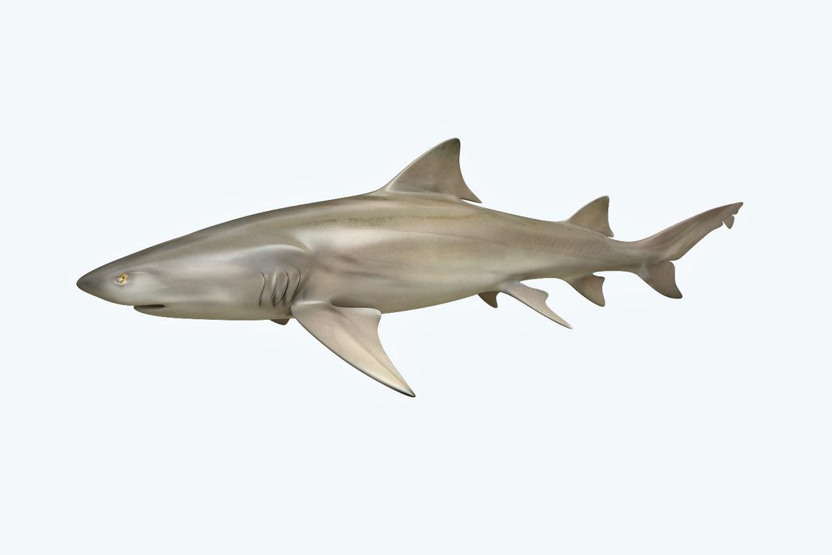 3D model shark lemon