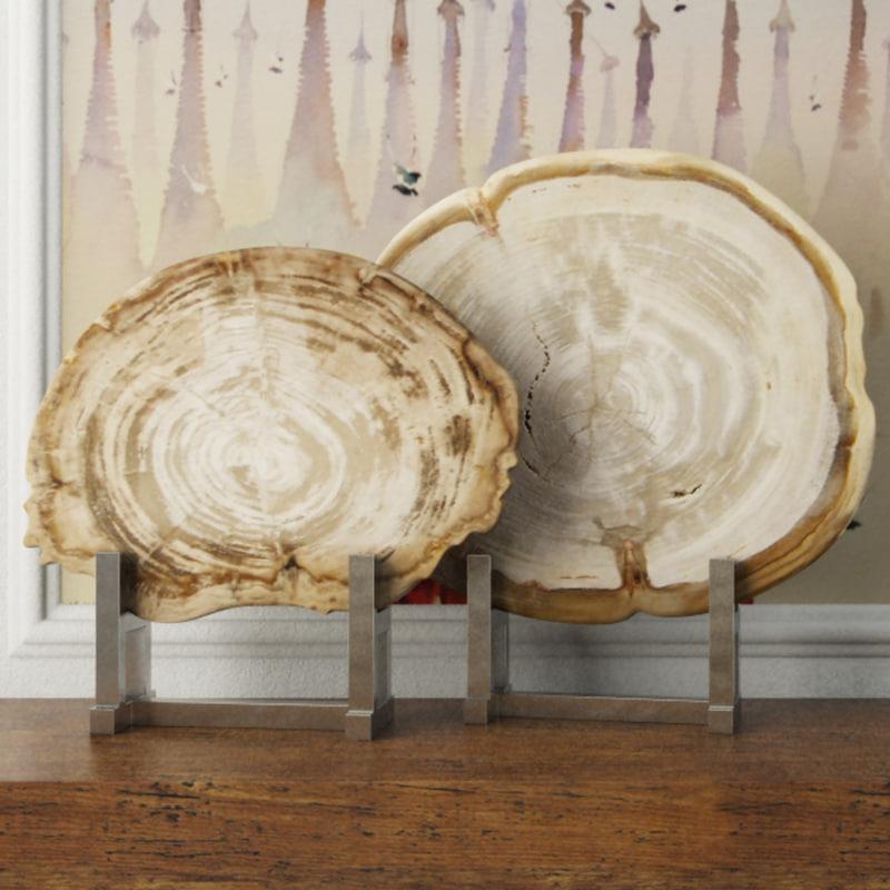 3D white petrified wood slices