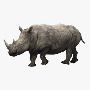 rhino rigging animation 3D