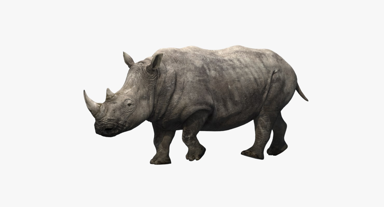 rhino rigging animation 3D