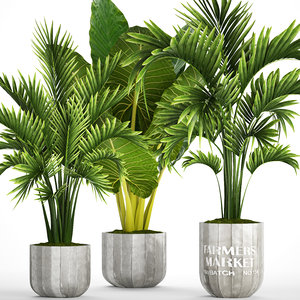 tropical plants 3D model