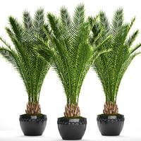 3D date palm
