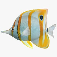 3D model copperband butterflyfish