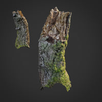 3D scanned nature forest stuff