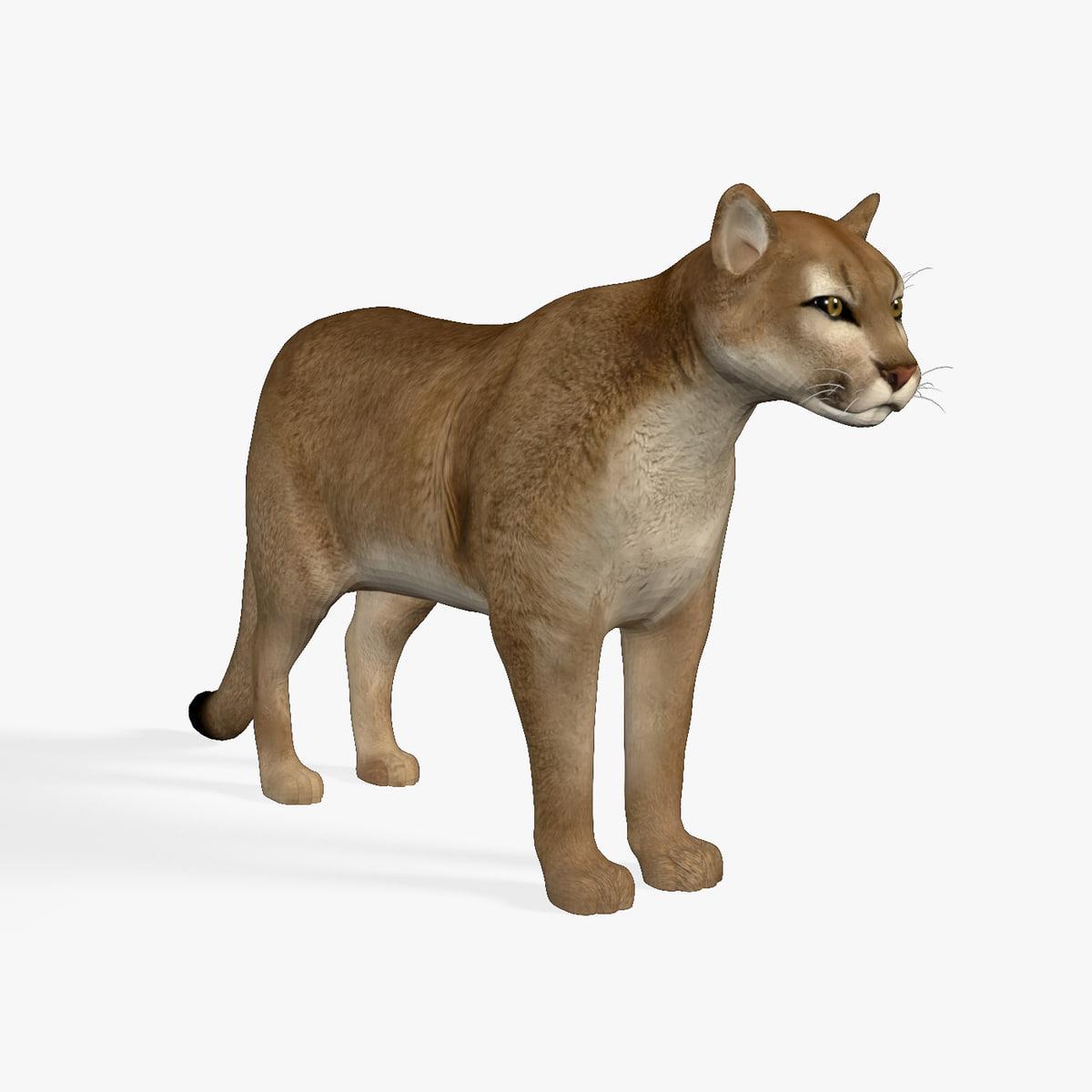 cougar mountain lion 3D model