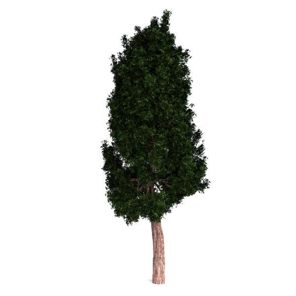 redwood giant 3D