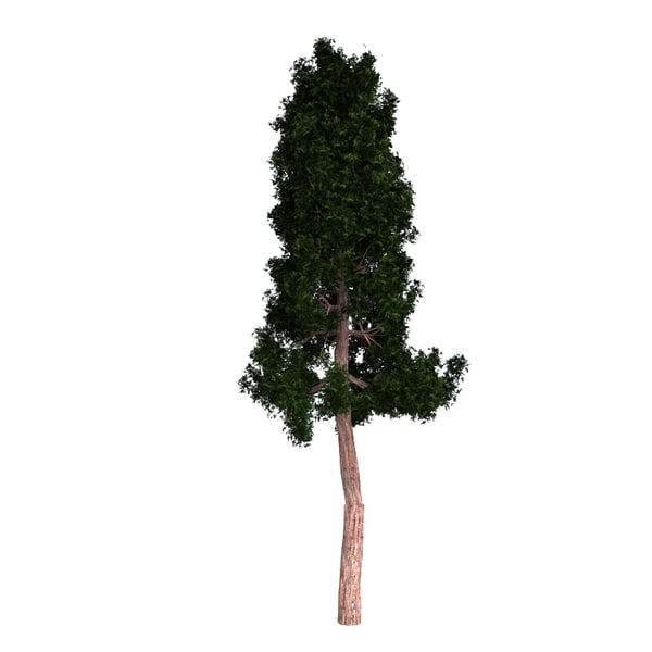 3D redwood giant