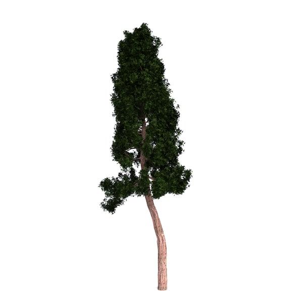 redwood giant 3D model