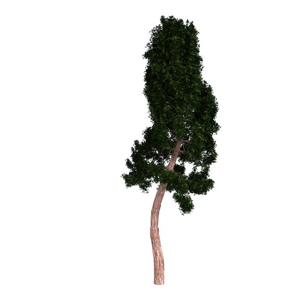 3D model redwood giant
