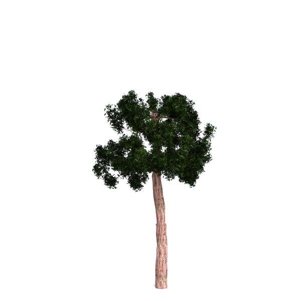 redwood giant model