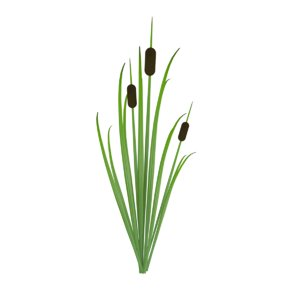 reed grass model