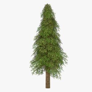fir tree 8 model