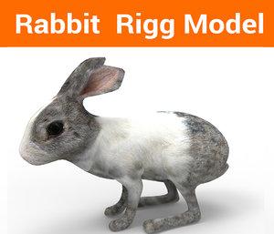 3D rabbit rigged model