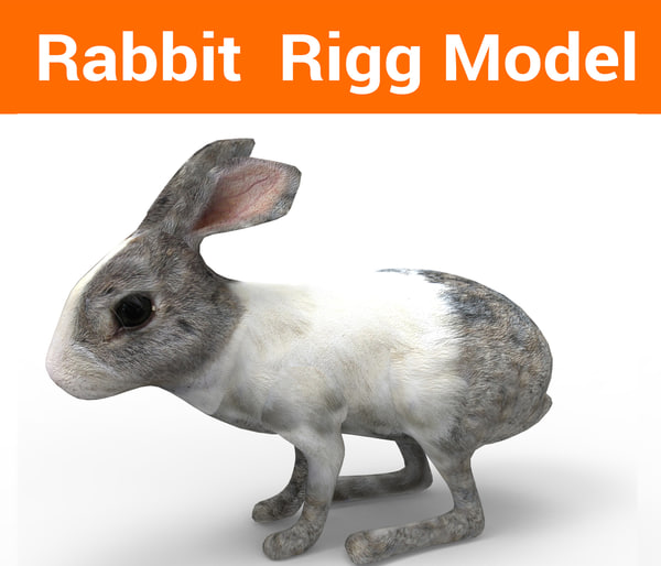 3D rabbit rigged model