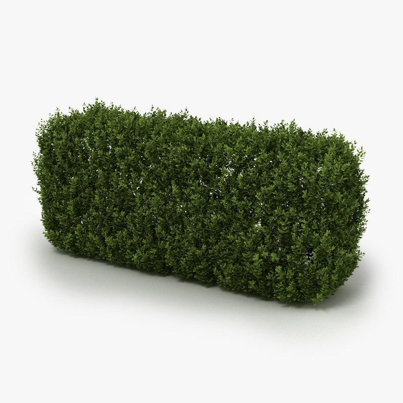hedge realistic 3D