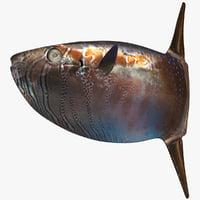 3D slender sunfish
