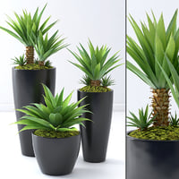 palma ukka model