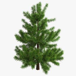fir tree 3D model