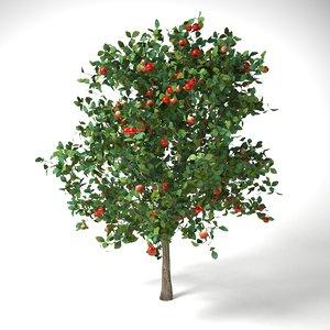 3D apple tree 3 7 model