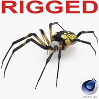Argiope Aurantia or Yellow Garden Spider Rigged for Cinema 4D