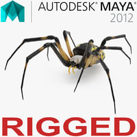 Argiope Aurantia or Yellow Garden Spider Rigged for Maya